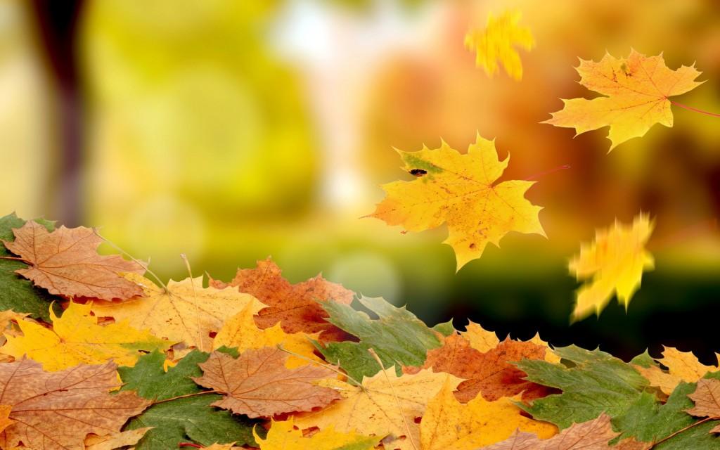 6993008-fall-leaves-falling