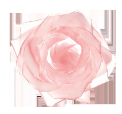 UVEX_ROSE_SEULE_CMJN