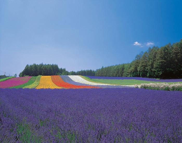 Hokkaido là hòn đảo xinh đẹp lớn thứ 2 ở Nhật Bản.
