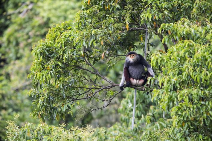 Pic 1 - Credit - Bjornolessen.com-Viet Nature_resize