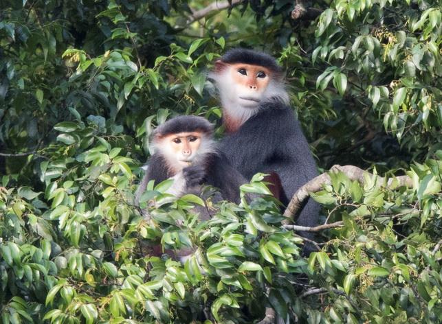 Pic 3 - Credit - Bjornolessen.com-Viet Nature_resize