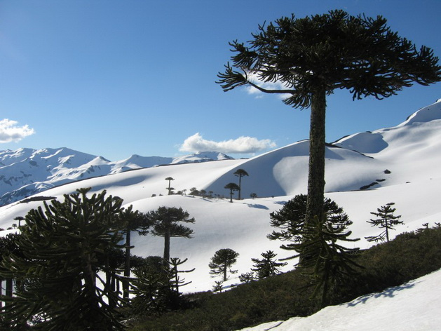 Núi Sierra Nevada tuyết phủ