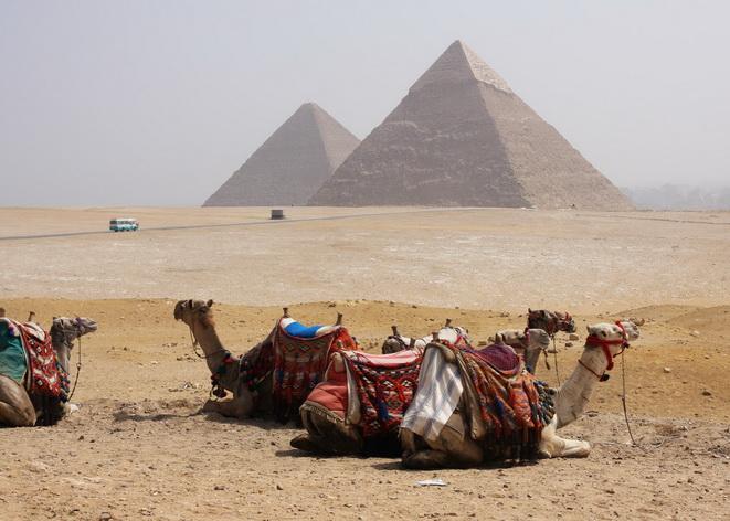 Lạc đà dành cho du khách tham quan