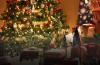 Bảng phối màu Giáng sinh lạ mà quen trong trang trí nhà