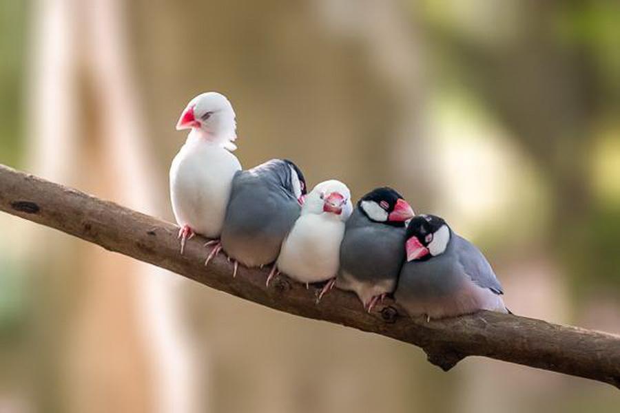 Làm việc nhóm teamwork hiệu quả chỉ đến khi có cùng chia sẻ giá trị