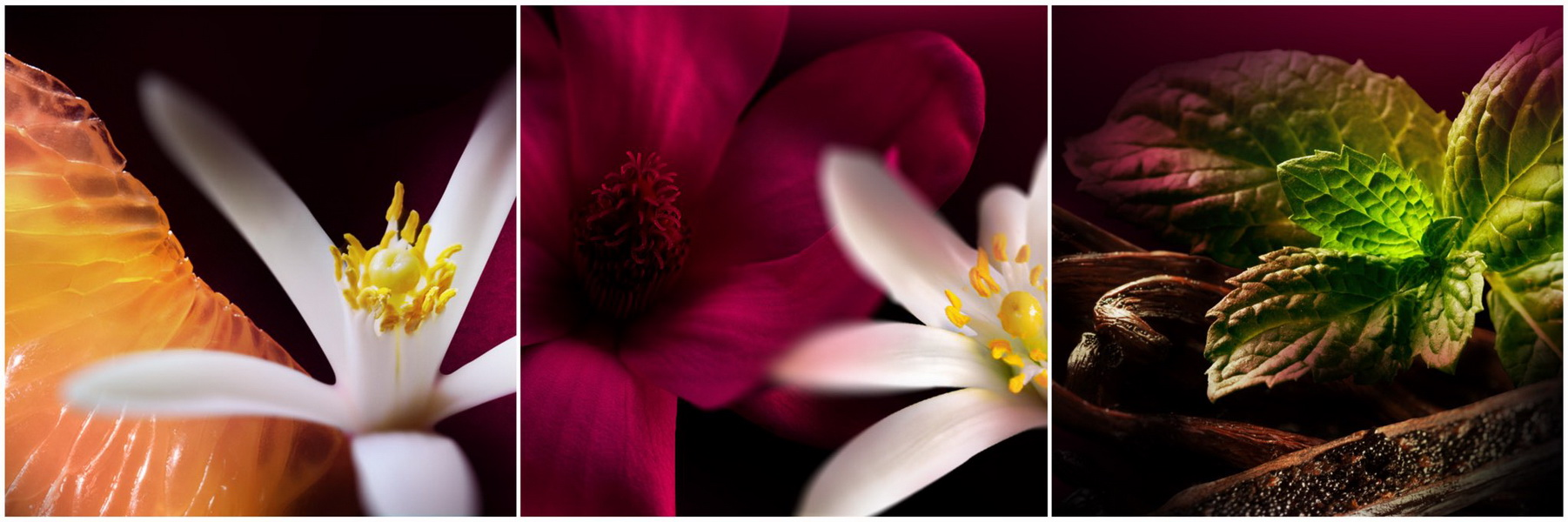 Đón ngày mới nhẹ nhàng với gợi ý mùi hương từ nước hoa Bvlgari